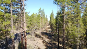 Final view of vegetation management project along Indian Ford Road near Sisters Oregon.
